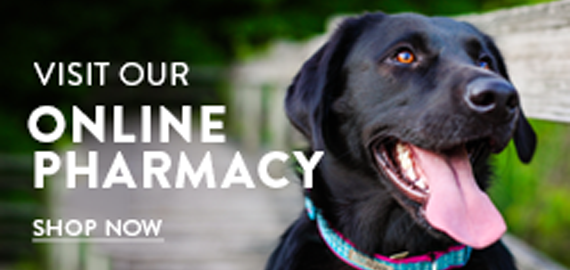 Visit our online pharmacy today!